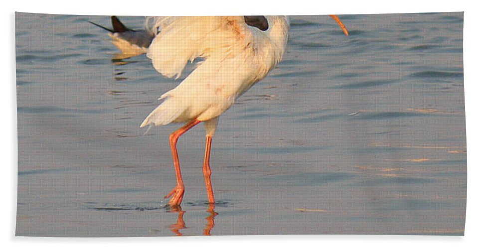Roena King Beach Towel featuring the photograph White Ibis With Wings Raised by Roena King