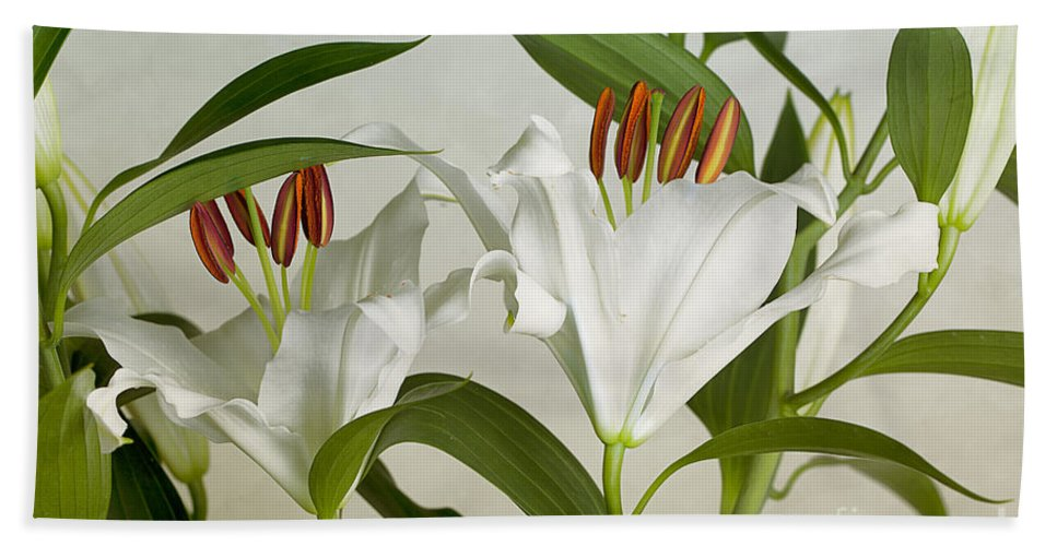 Lily Beach Towel featuring the photograph White Lilies by Nailia Schwarz