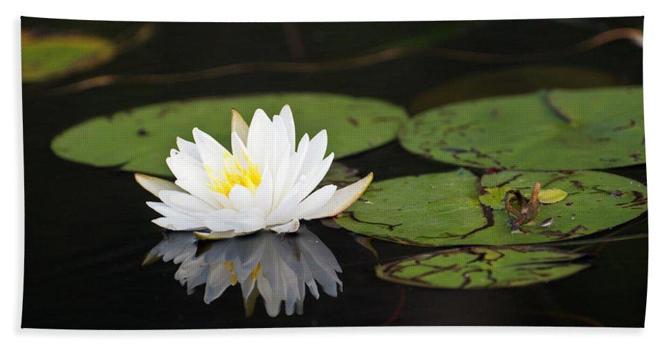 White Lotus Flower Lily Pad Beach Towel For Sale By Glenn Gordon