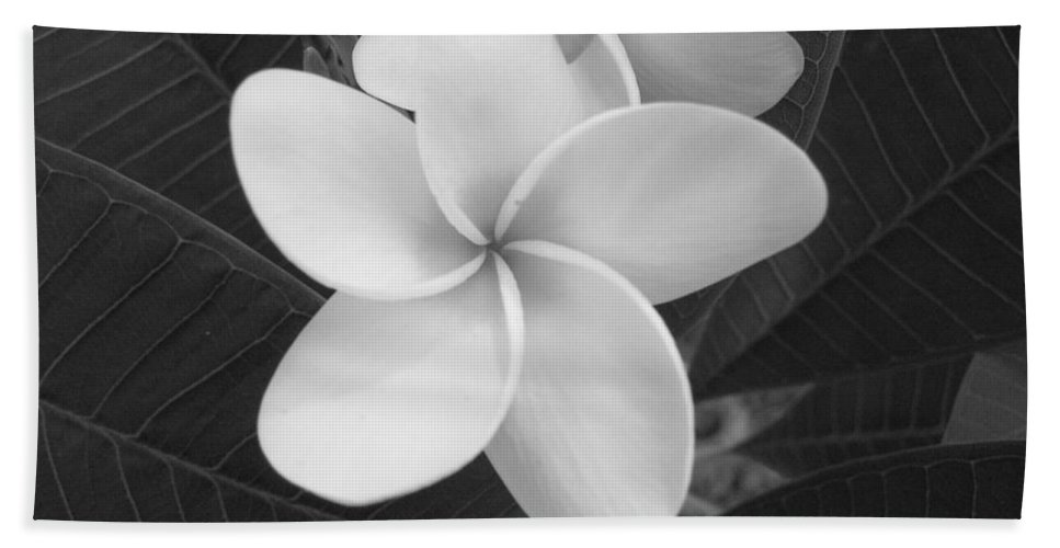 Flower Beach Towel featuring the photograph White Plumeria Bw by Michael MacGregor