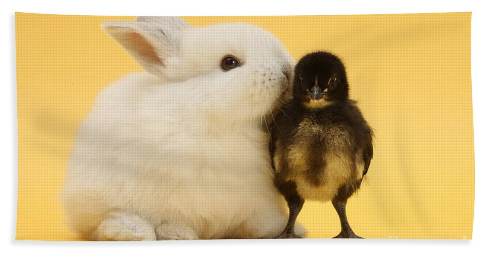 Nature Beach Towel featuring the photograph White Rabbit And Bantam Chick On Yellow by Mark Taylor
