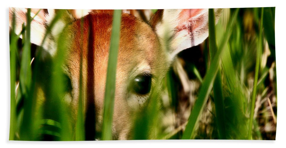 White-tailed Deer Beach Towel featuring the digital art White Tailed Deer Fawn Hiding In Grass by Mark Duffy