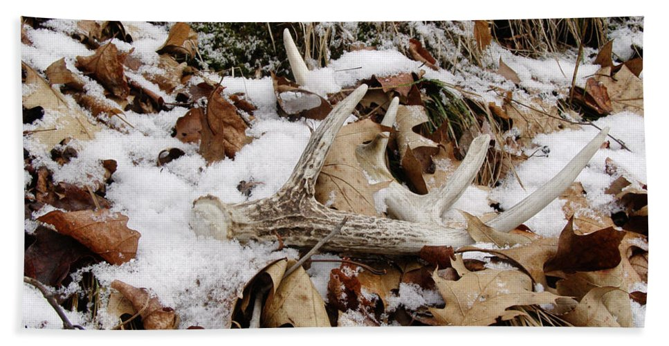 Whitetail Deer Beach Towel featuring the photograph Whitetail Deer Antler - Half Of 10 by Angie Rea