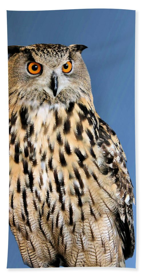Horned Owl Beach Towel featuring the photograph Who by Kristin Elmquist