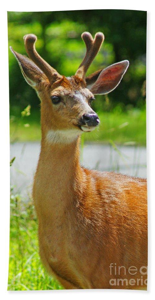 Deer Beach Towel featuring the photograph Wild Deer by Randy Harris