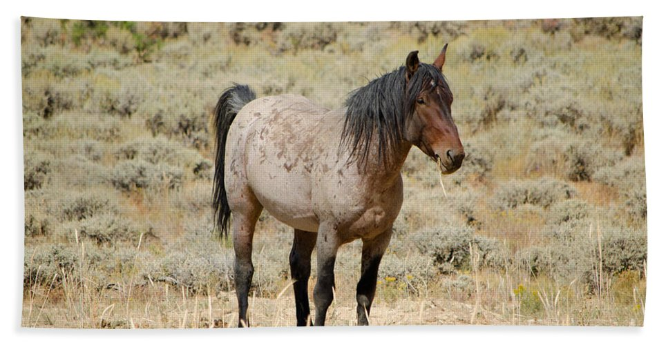 Horse Beach Towel featuring the photograph Wild Horses Wyoming - The Mare by Donna Greene