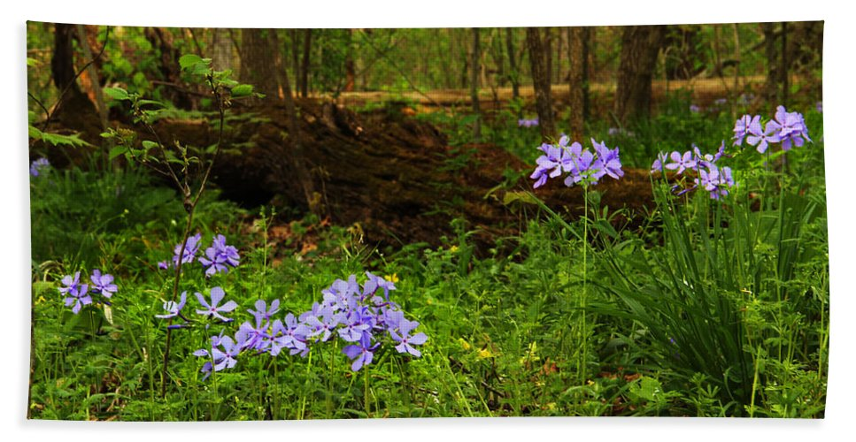 Wild Phlox Beach Towel featuring the photograph Wild Phlox In The Woodlands by Greg Matchick