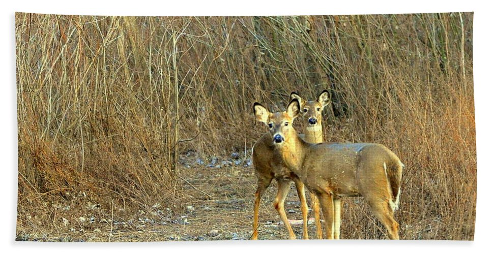 Deer Beach Towel featuring the photograph Winter Does by Marty Koch