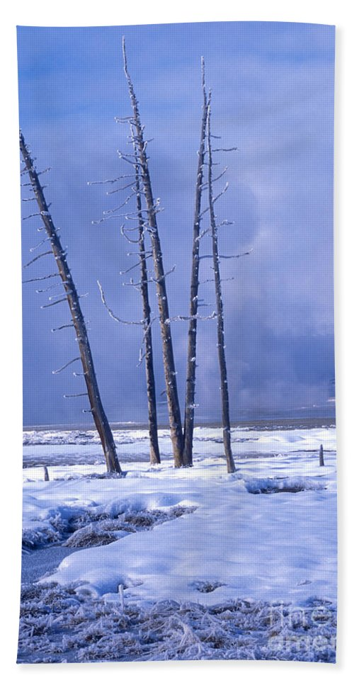 Yellowstone Beach Towel featuring the photograph Winter by Sandra Bronstein