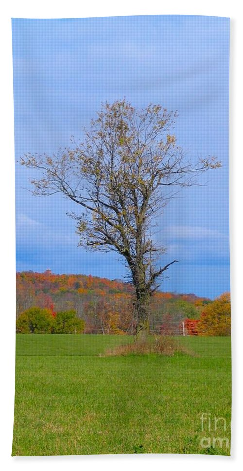 Tree Beach Towel featuring the photograph Without A Forest by Art Dingo