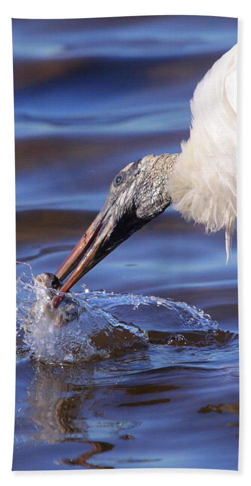 Stork Beach Towel featuring the photograph Wood Stork Fishing by Bruce J Robinson