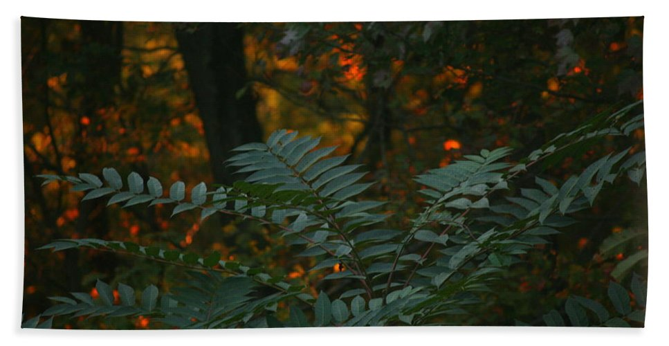 Sunset Beach Towel featuring the photograph Wooded Dream by Neal Eslinger