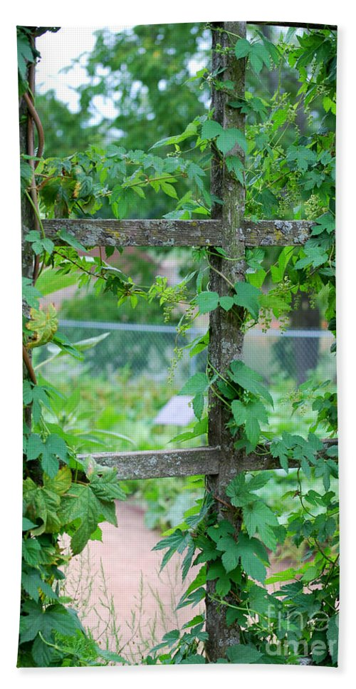 Trellis Beach Towel featuring the photograph Wooden Trellis And Vines by Nancy Mueller