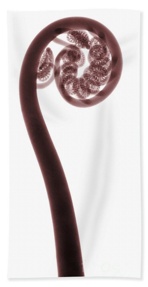 Nature Beach Towel featuring the photograph X-ray Of A Fern by Ted Kinsman
