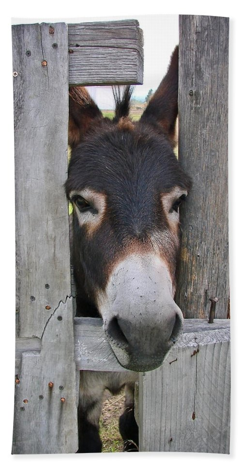 Donkey Beach Towel featuring the photograph Yee Haw by Athena Mckinzie