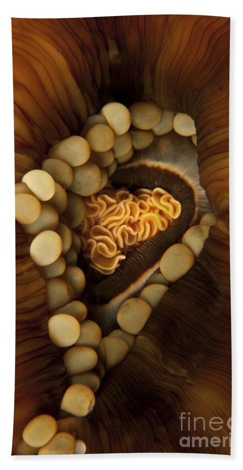 Anemone Beach Towel featuring the photograph Yellow And Orange Anemone Mouth, Sabah by Mathieu Meur