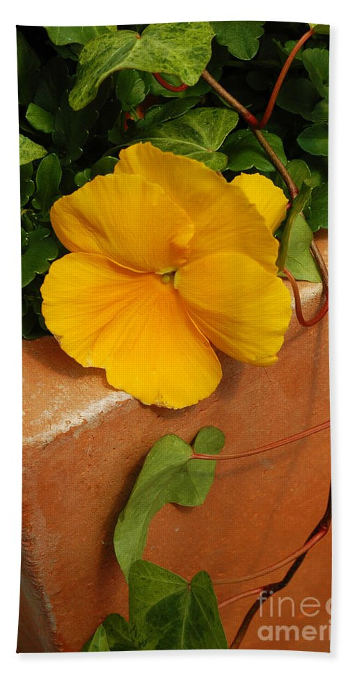 Yellow Beach Towel featuring the photograph Yellow Blossom On Planter by Mike Nellums