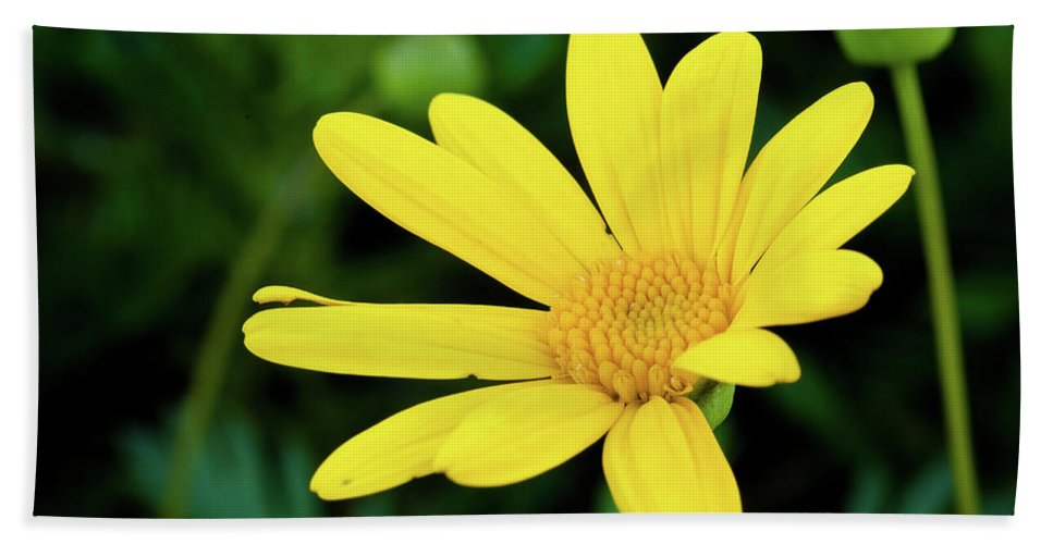 Flower Beach Towel featuring the photograph Yellow Flower by Greg Nyquist