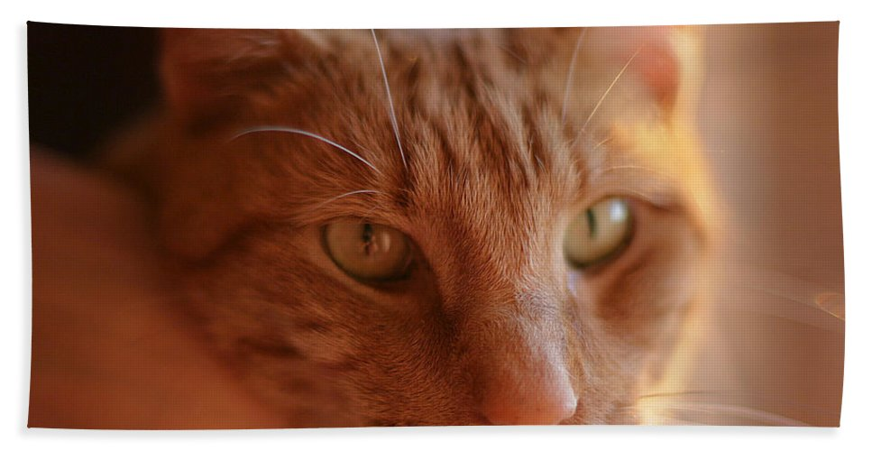 Cat Beach Towel featuring the photograph Yellow Tabby by Mark Greenberg