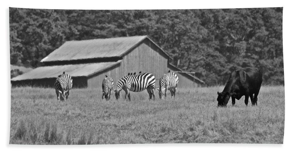 San Simeon Beach Towel featuring the photograph Zebras In San Simeon by Eric Tressler