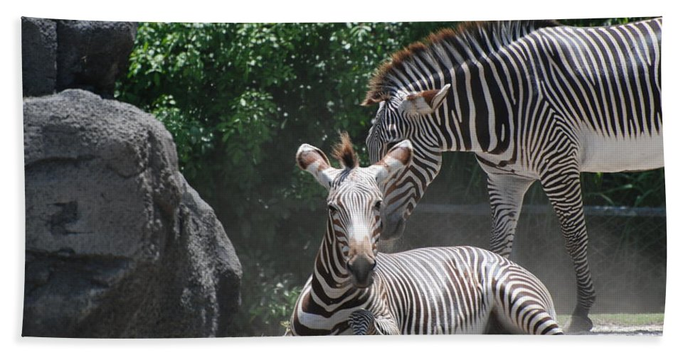 Animal Beach Towel featuring the photograph Zerbas by Rob Hans