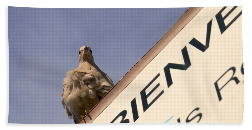 Lehtokukka Beach Towel featuring the photograph African Collared Dove 2 by Jouko Lehto