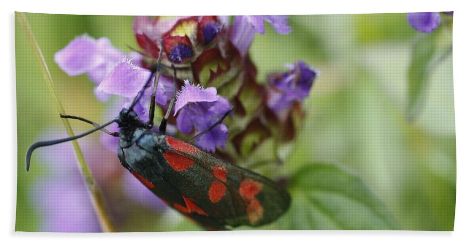 Burnet Moth Beach Towel featuring the photograph Burnet Moth by Martina Fagan