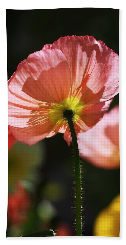 Poppies Beach Towel featuring the photograph Icelandic Poppies by Rona Black