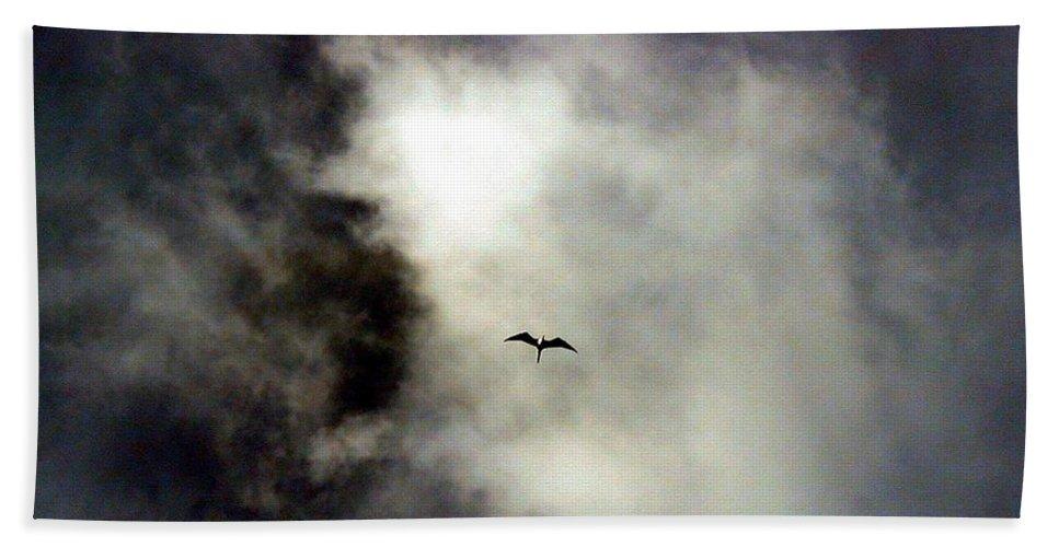 Bird Beach Towel featuring the photograph Magnificent Frigatebird by Rich Bodane