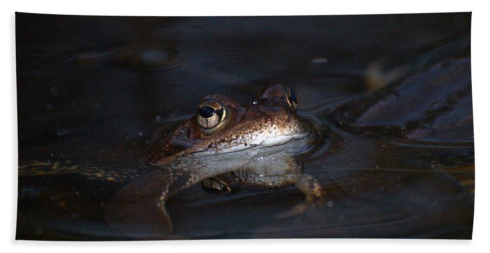 Lehtokukka Beach Towel featuring the photograph The Common Frog 1 by Jouko Lehto
