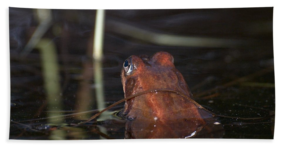 Lehtokukka Beach Towel featuring the photograph The Common Frog 2 by Jouko Lehto