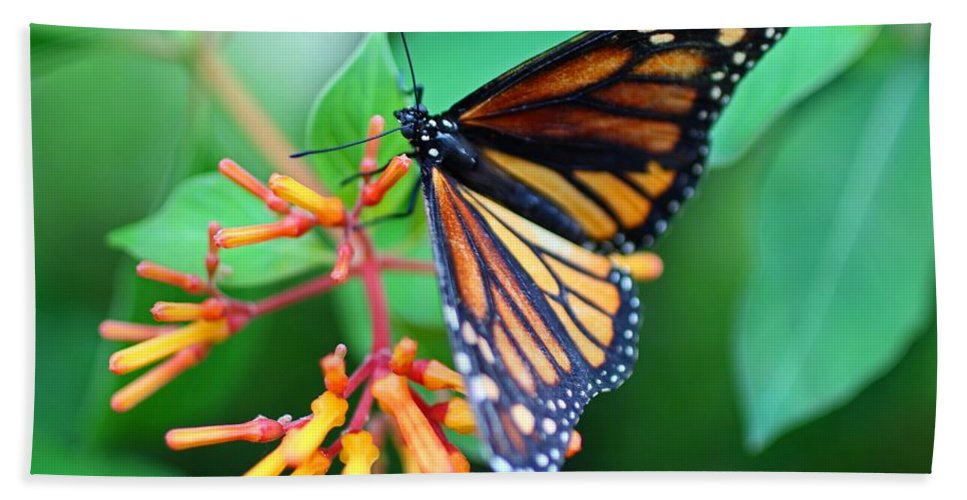 Butterfly Beach Towel featuring the photograph A Delightful Seduction by Michiale Schneider