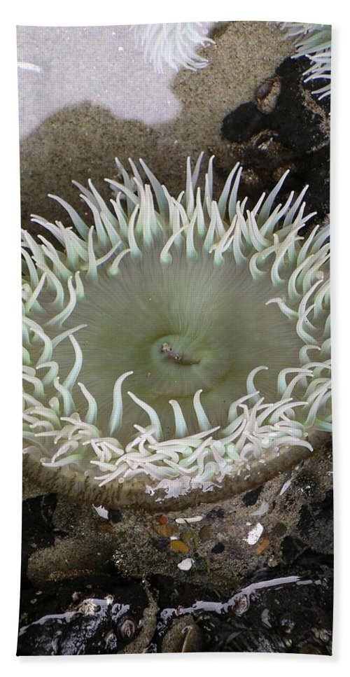 Anemone Beach Towel featuring the photograph Anemone by Rich Bodane