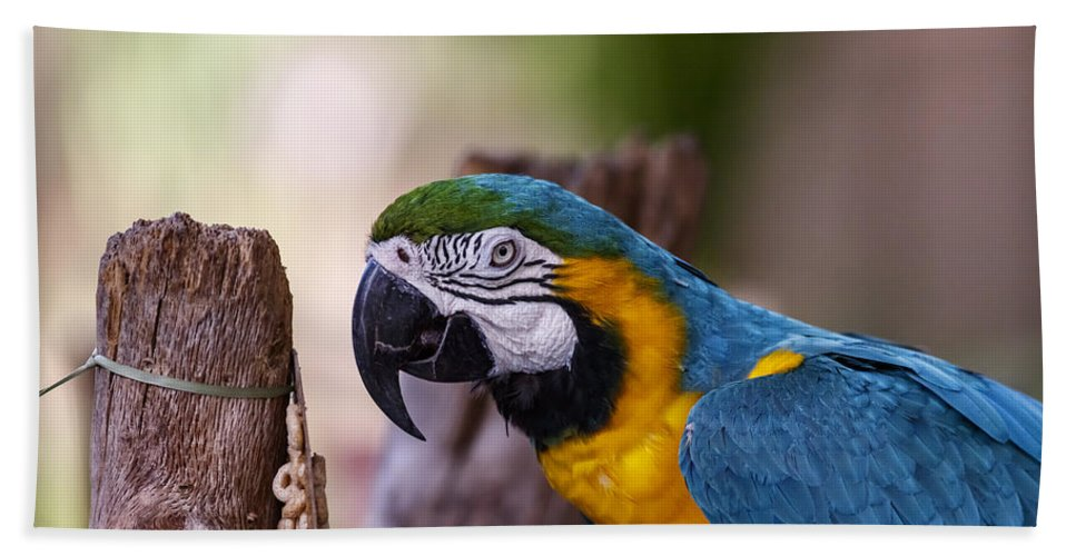 Naples Beach Towel featuring the photograph Ara Parrot by Peter Lakomy