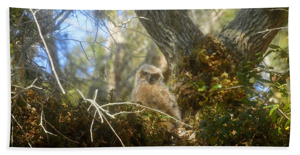 Great Horned Owl Beach Towel featuring the photograph Babe In The Woods by David Lee Thompson