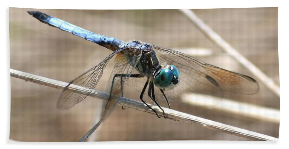 Dragonfly Beach Towel featuring the photograph Big Blue by Carol Groenen