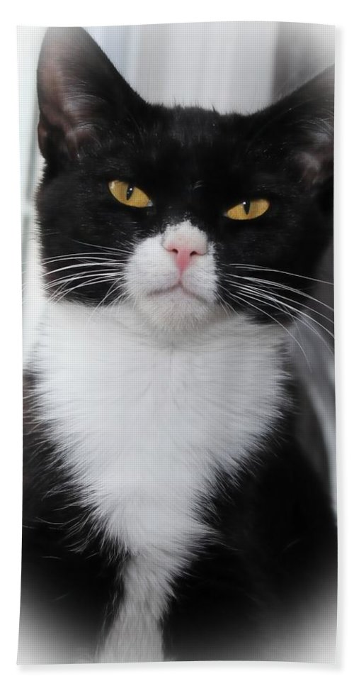 Black Beach Towel featuring the photograph Black And White Cat by Joyce Baldassarre