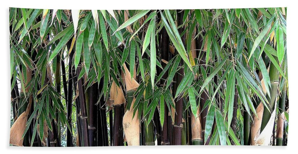 Black Beach Towel featuring the photograph Black Bamboo by Mary Deal