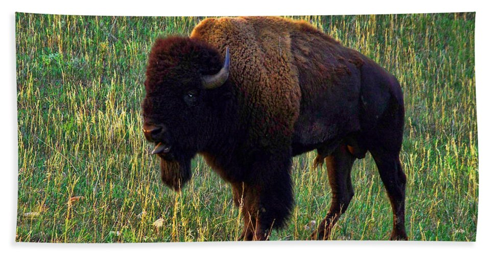 Buffalo Beach Towel featuring the photograph Buffalo Custer State Park by Tommy Anderson