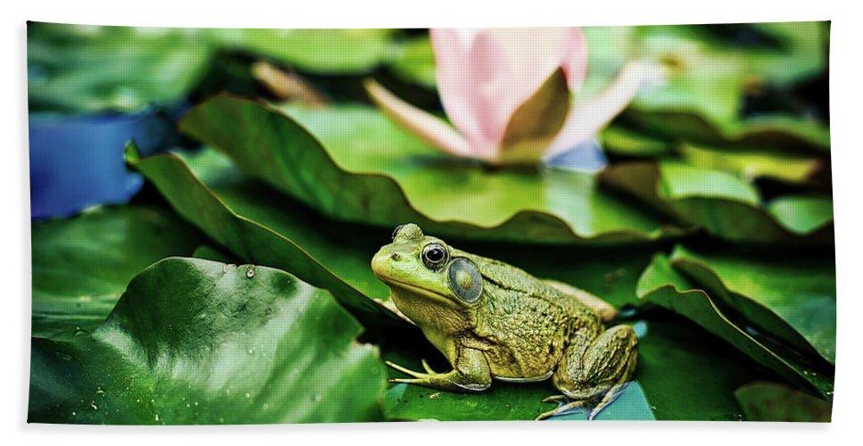 Frog Beach Towel featuring the photograph Bullfrog by Jill Wellington