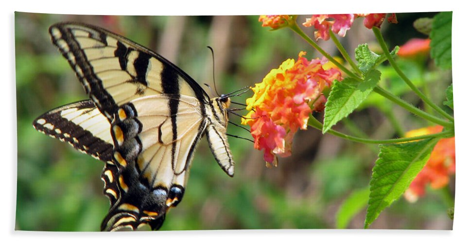 Butterfly Beach Towel featuring the photograph Butterfly by Amanda Barcon