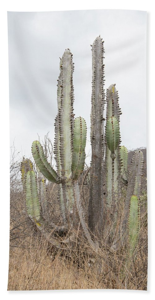 Cactus Beach Towel featuring the digital art Cactus by Carol Ailles
