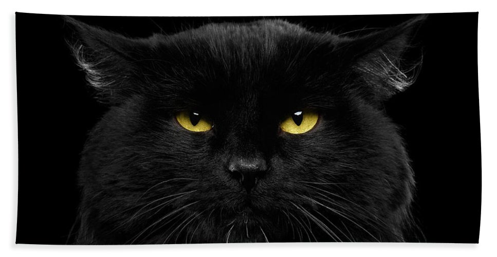 Black Beach Towel featuring the photograph Close-up Black Cat with Yellow Eyes by Sergey Taran