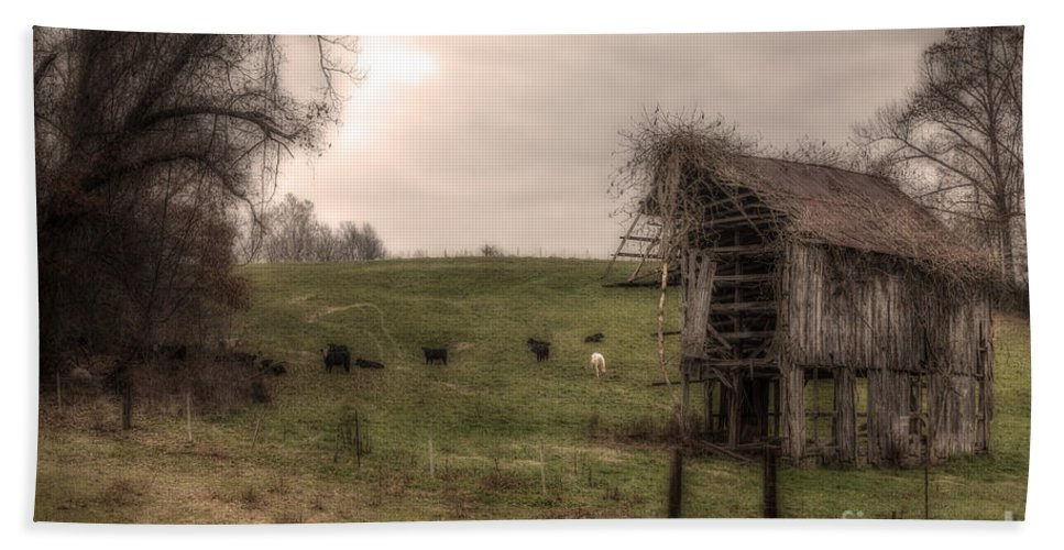 2014 Beach Towel featuring the photograph Cows In A Field By A Barn by Larry Braun