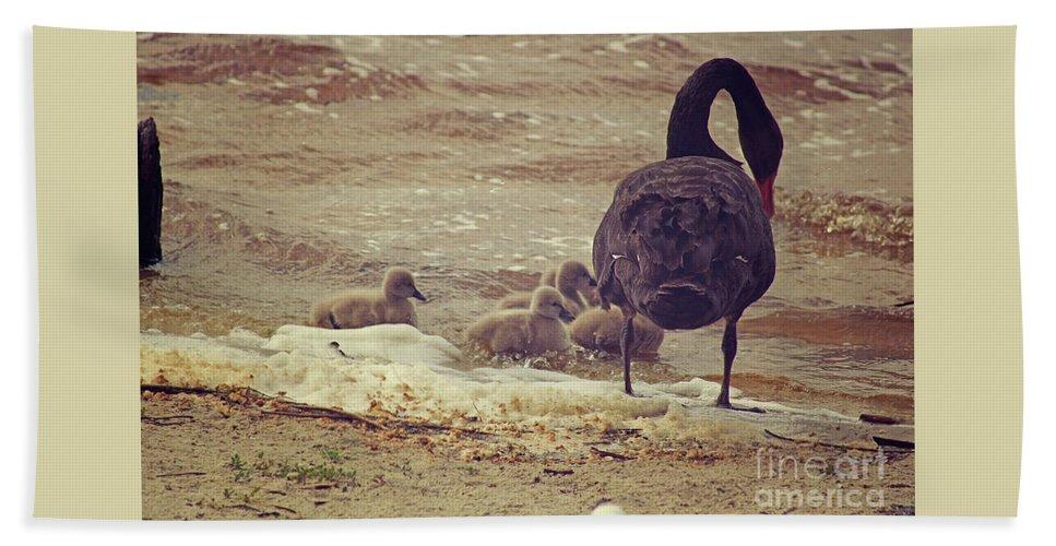 Black Swan Beach Towel featuring the photograph Cygnus Atratus II by Cassandra Buckley