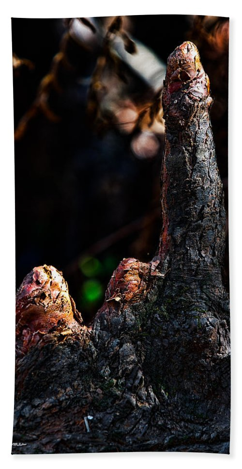 Nature Beach Towel featuring the photograph Cypress Knees by Christopher Holmes