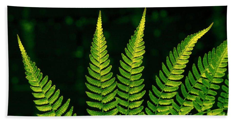 Bellevue Botanical Gardens Beach Towel featuring the photograph Fern Close-up Nature Patterns by Jim Corwin