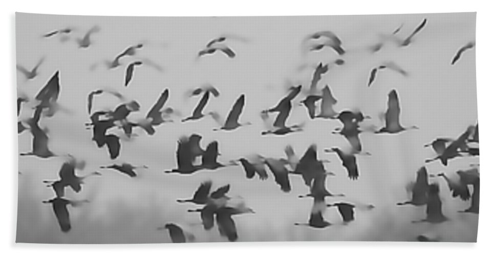 Birds Beach Towel featuring the photograph Flight Of The Sandhill Cranes by Pam Holdsworth