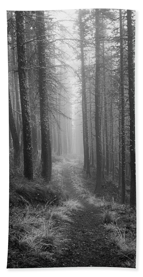Rodgers Pass Beach Towel featuring the photograph Forest Path by Leland D Howard
