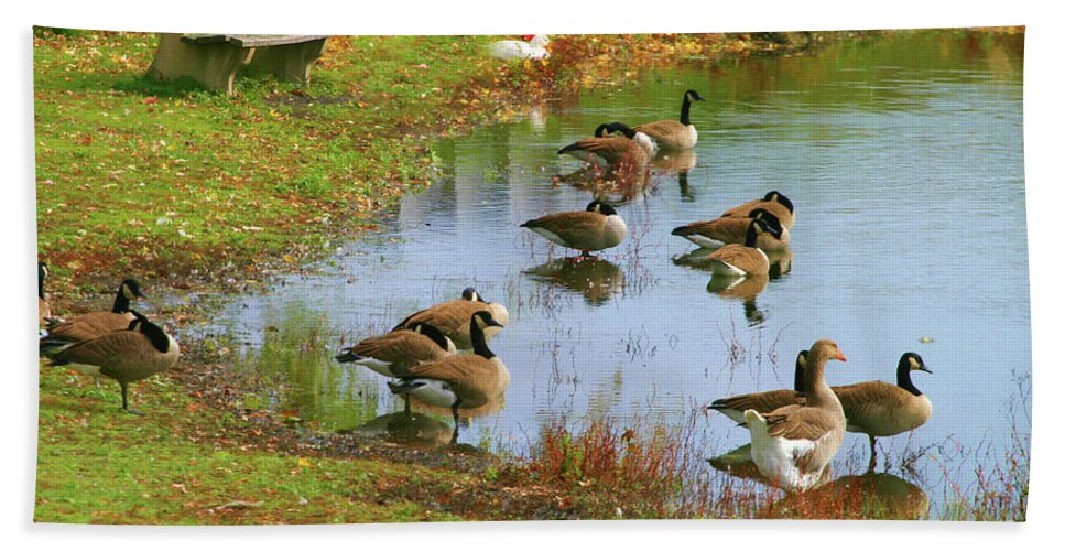 Seasons Beach Towel featuring the photograph Geese Lake Fall by Chuck Kuhn